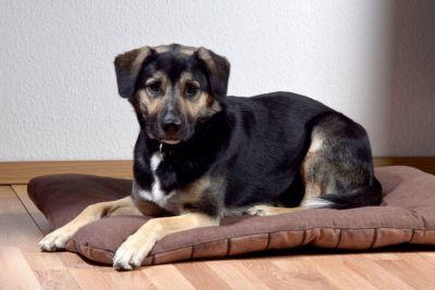 XXL-Hundebett mit dunkelbraunem Karomuster, gro...