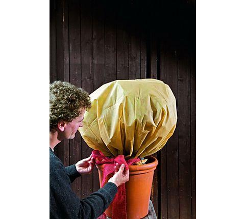 frostempfindliche k bel und garten pflanzen warm anziehen. Black Bedroom Furniture Sets. Home Design Ideas