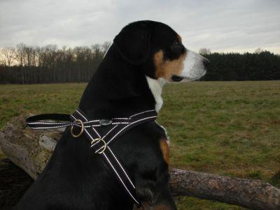 Hundegeschirr Reflex 70-80