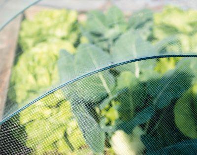 Garten Star  Insektennetz 5x2 m