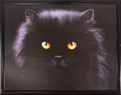 Bild Black Persian 103x71 cm von David Ward