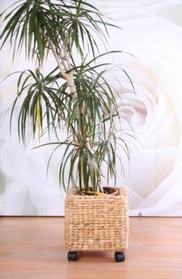 heute-wohnen Blumenkübel Blumentopf aus Wasserhyazinthe, mit Rol bei Plus Online Shop