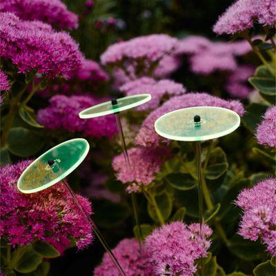 Cazador del sol Sonnenstrauß aus 3 Sonnenblumen 8cm Durchmesser Grün