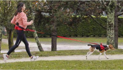 ZOLUX Sportler-Set für Hundefreunde - S