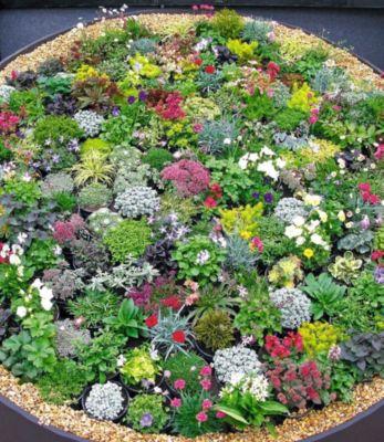 Winterhart Steingarten-Stauden-Mix 10 Pflanzen