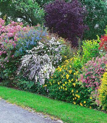 Baldur Garten Sommer-Hecken-Kollektion, Blütenhecke, Blühhecke 5 Pflanzen Caryopteris, Hypericum, Deutzia strawberry field, Spirea und Weigeli