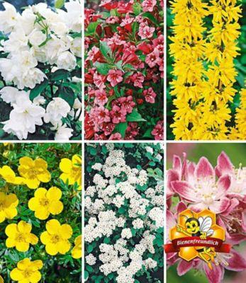 5 Meter Blüh-Hecken-Kollektion, Blütenhecke 6 Pflanzen  Forsythie, Weigelie, Jasmin, Deutzie, Potentilla, Spirea 1457202000
