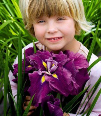 Iris ´´Eileen&acutes Dream´´ 1 Knolle winterhart