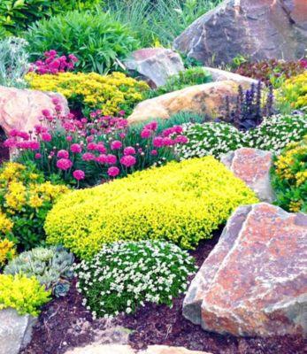 Steingarten-Mix Happy Flowers,4 Pflanzen