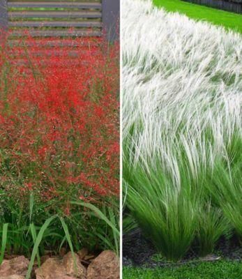 Federgras stipa pflanzen g nstig kaufen for Wandhalterung pflanzen