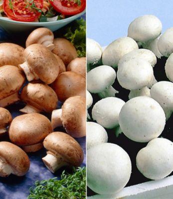 Baldur Garten Champignon-Kultur Kollektion, 2 Sets Braune Steinchampignons und Weiße Edel-Champignons Champignonkultur Pilze Pilzkultur
