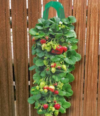 2 Erdbeer-Pflanzbeutel & 9 Hänge-Erdbeeren,Set