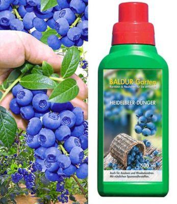 Baldur Garten Heidelbeeren Reka Blue und Heidelbeer-Dünger Micro AL 1 Set