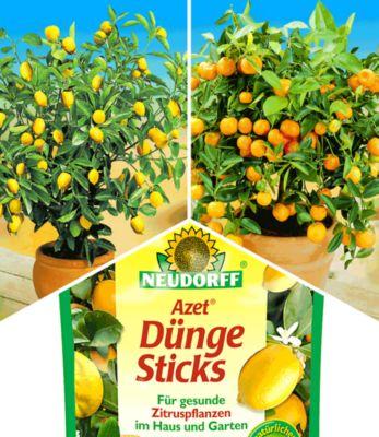 Zitronen- & Orangenbaum & NEUDORFF® Zitrus-Dünge-Sticks,1 Set