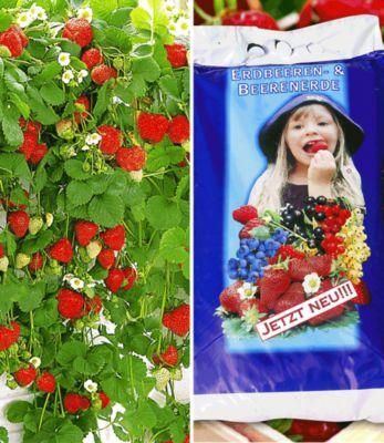 Hänge-Erdbeere ´Hummi®´ & Spezial-E...