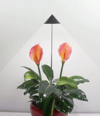 LED Wachstumslampe fürs Zimmer ´´graphit´´, 7 W...