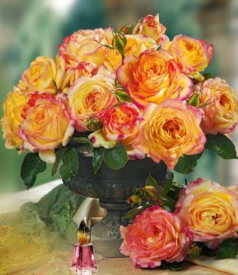 Delbard® Parfum-Rosen ´Mitsouko®´, 1 Pflanze Duftrosen Edelrose