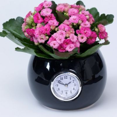 Kalanchoe rosa + Übertopf schwarz mit Uhr,1 Set