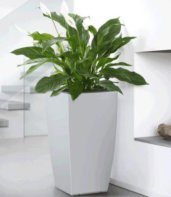 blumenk bel gro wei preisvergleich die besten angebote online kaufen. Black Bedroom Furniture Sets. Home Design Ideas