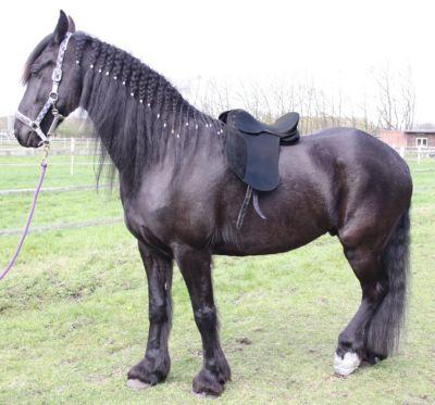 Echt Leder Dressur Sattel 17 Zoll Pferdesattel ...