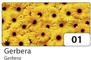 folia 86401 Transparentpapier 115 g/m², 23x33cm, Gerbera, gelb/schwarz (5 Bogen)