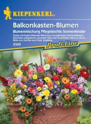 Kiepenkerl  Balkonkastenblumen Pflegeleichte Sonnenkinder