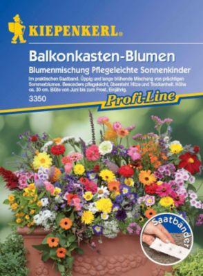 Kiepenkerl  Balkonkastenblumen Sonnenkinder