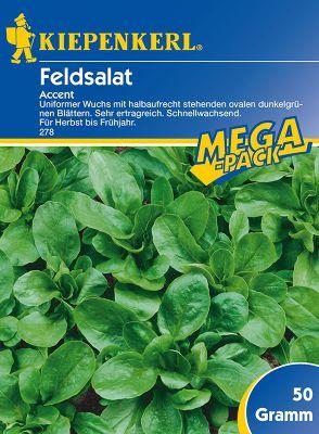 Kiepenkerl  Feldsalat ´Accent´ Mega-Pack