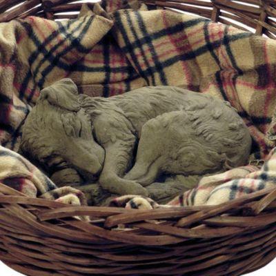Hund schlafender Welpe
