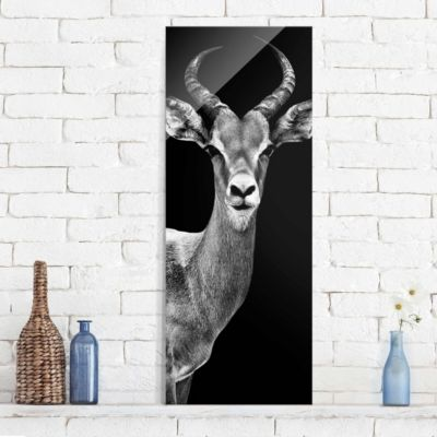 glasbild-impala-antilope-schwarz-weiss-panorama-hoch-100x40-27-00-pp-gb