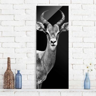 glasbild-impala-antilope-schwarz-weiss-panorama-hoch