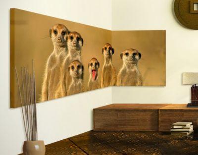 Eckleinwandbild Meerkat Family Panorama 2:1   Dekoration > Bilder und Rahmen > Bilder   PPS. Imaging