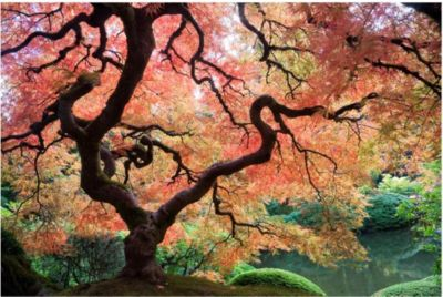 Waldtapete - Vliestapete - Japanischer Garten - Fototapete Wald B bei Plus Online Shop