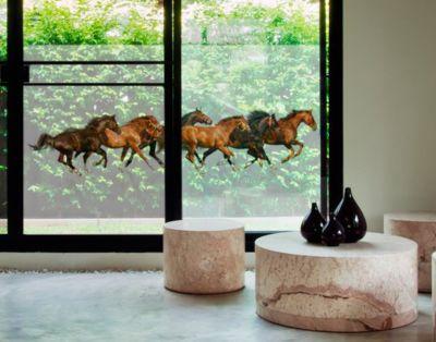 Fensterfolie - Sichtschutz Fenster Pferdeherde - Fensterbilder