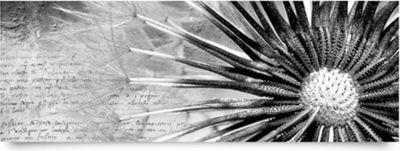 wandbild-no-38-pusteblume-schwarz-wei-panorama