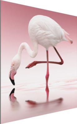 alu-dibond-bild-flamingo-dance-quadrat-1-1-60x60-50-00-pp-adb-wh
