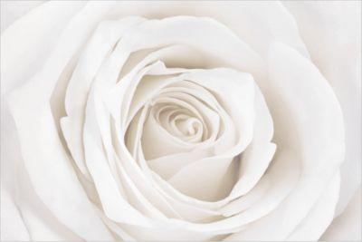 Rosen Vliestapete Premium - Blumentapete Pretty White Rose - Blumen Fototapete Breit