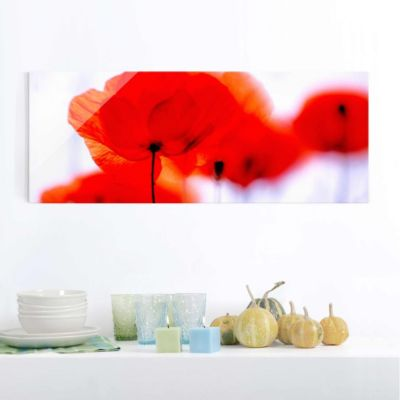 glasbild-magic-poppies-panorama-quer-blumenbild-glas