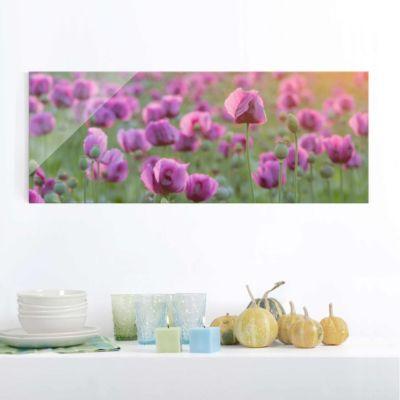 glasbild-violette-schlafmohn-blumenwiese-im-fruhling-panorama-quer-blumenbild-glas