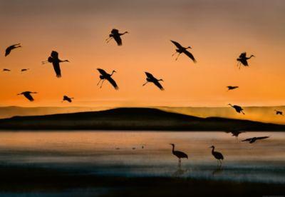vlies-fototapete-vogel-bei-sonnenuntergang-368x254cm