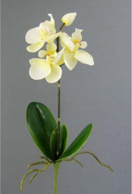 kunstliche-phalenopsis