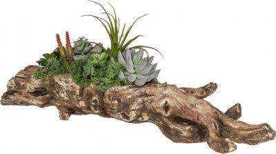 Sukkulentenarrangement ´´Wurzel´´ Kunstpflanze | Dekoration > Dekopflanzen > Pflanzen | Fuchs seit 1895
