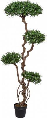 Podocarpusbaum Kunstpflanze mit Naturstamm   Dekoration > Dekopflanzen > Kunstpflanzen   Fuchs seit 1895