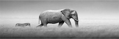 hti-living-glasbild-elefanten