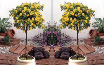 ergebnisse zu st mmchen florales. Black Bedroom Furniture Sets. Home Design Ideas