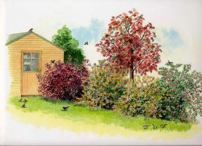 vogelhecke-2x5-verschiedene-pflanzen