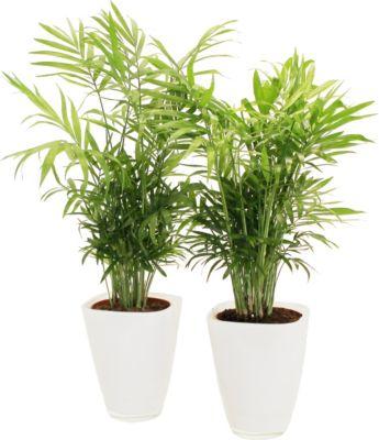 Genial Bodenschutzmatten Für Home & Office Umweltfreundlich Und 100% Recyclebar Kleinmöbel & Accessoires