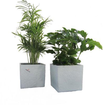 Pflanzzubehör Diy 25m Automatisch Bewässerungssystem Micro Drip Bewässerung Gartenpflanze De Chinesische Aromen Besitzen Bewässern