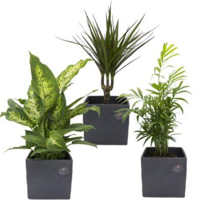 Genial Bodenschutzmatten Für Home & Office Umweltfreundlich Und 100% Recyclebar Büro & Schreibwaren
