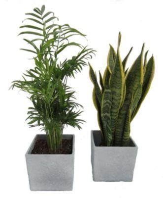 Bodenschutzmatten Genial Bodenschutzmatten Für Home & Office Umweltfreundlich Und 100% Recyclebar